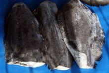 Палтус без головы тушка  1 - 2 кг  Мурманск от 6 кг