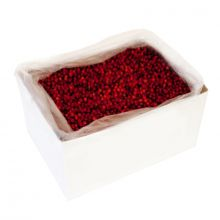Frozen Red Rowan berry IQF, 10kg carton box