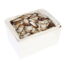 Frozen CEP, 1st class, IQF, whole 4-6cm, 5kg carton box
