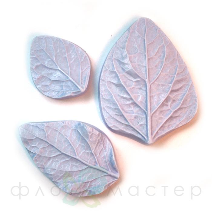 Набор молдов листья колеуса