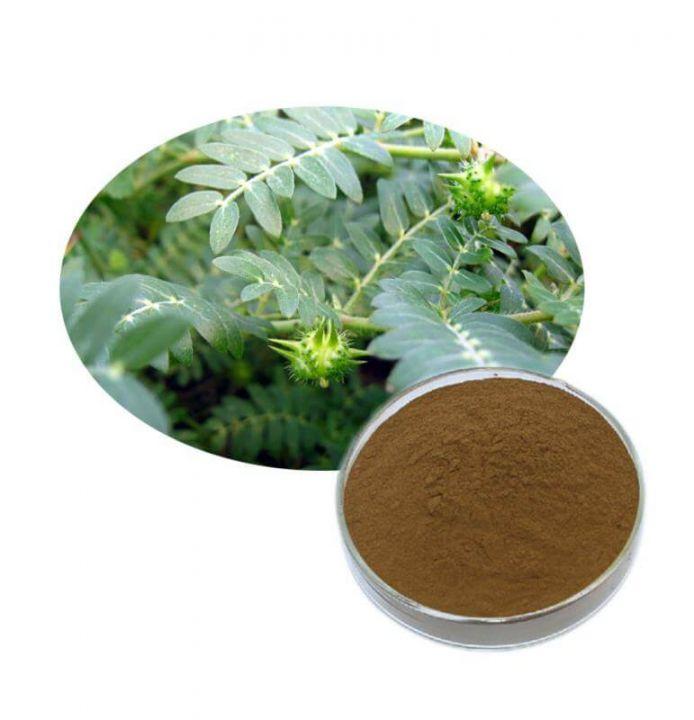 Экстракт Якорцы (трибулус) 50г - 40% сапонинов