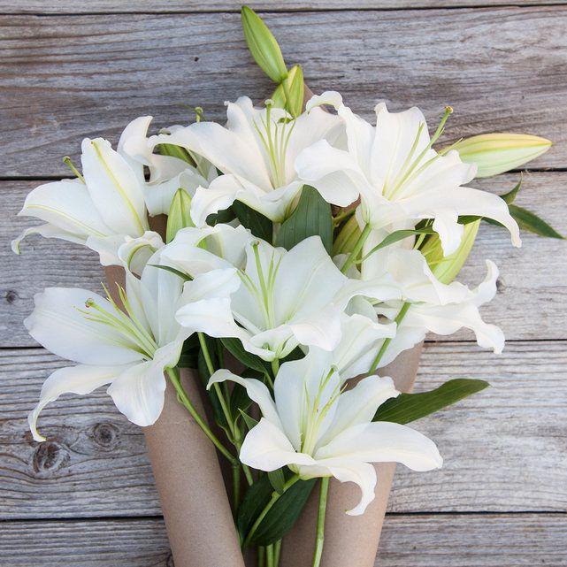 Лилии азиатские (белые)