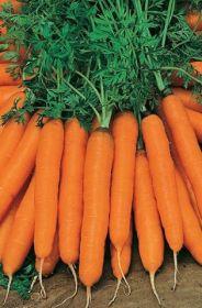 "Морковь  ""ЯРОСЛАВНА"""