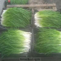 Лук зелёный / 100 гр