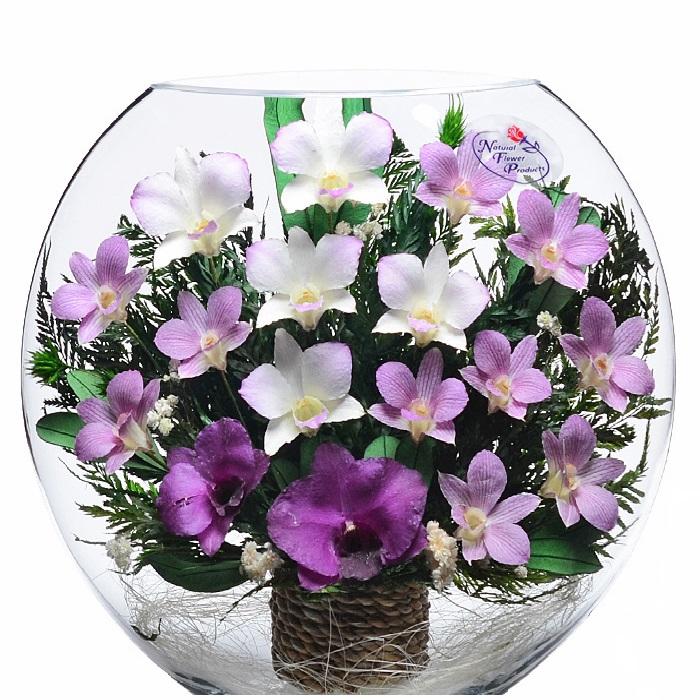 Вечные орхидеи в стекле