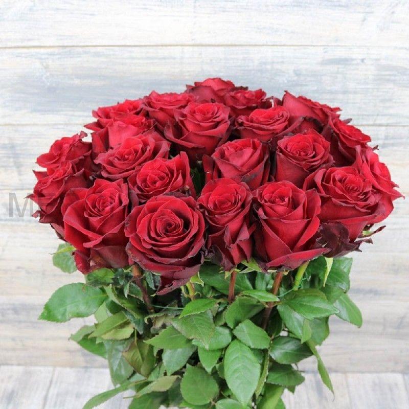 Букет из роз 25 шт, Эквадор (красные)