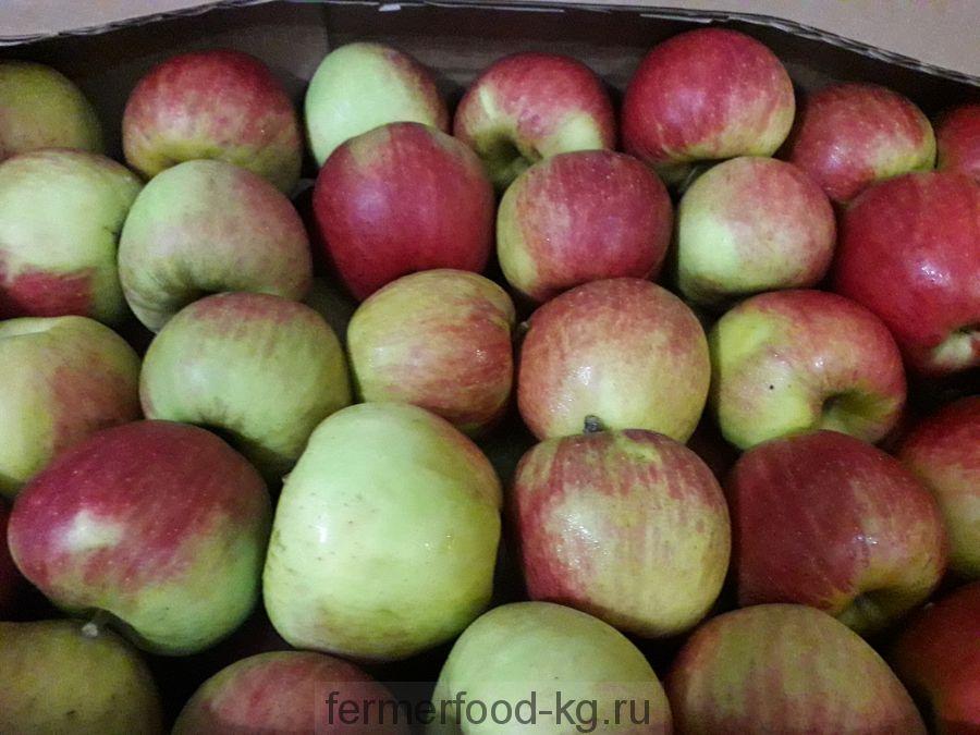 Яблоки сорт Чемпион 1/кг