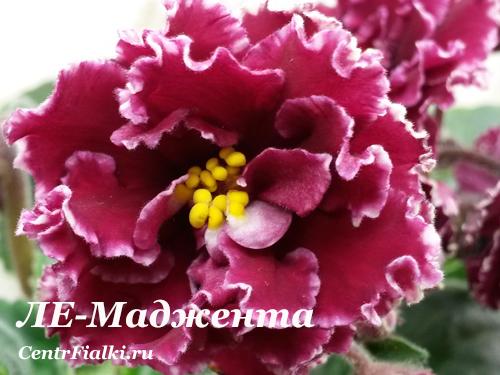 ЛЕ-Маджента (Е.Лебецкая)