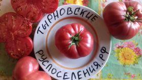 Томат Тырновский красный