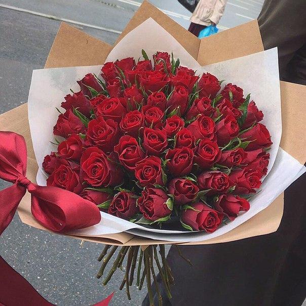 51 красно-алая роза