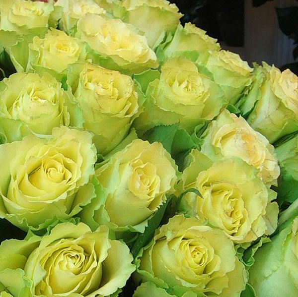 15 роз Лимонад
