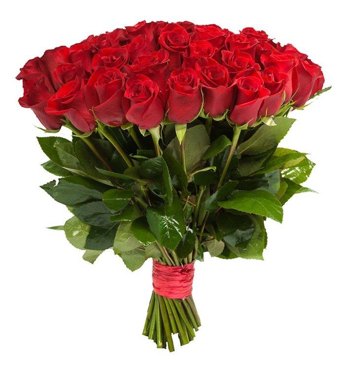 25 роз Фридом