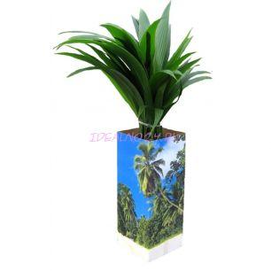 Кокос (Cocos nucifera) 19/130