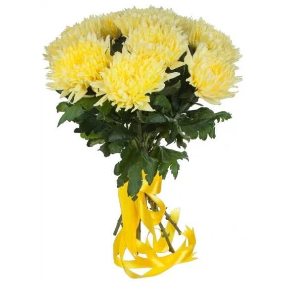 9 одноголовых хризантем