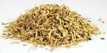 Ведьмина трава (Triticum repens)