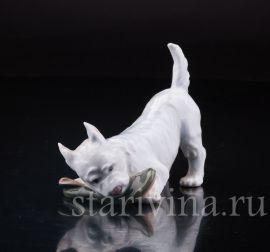 Собака с ботинком, Royal Copenhagen, Дания, вт. пол. 20 в.
