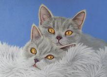 Почтовая открытка Влюбленные котики