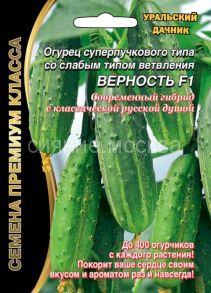 Огурец суперпучкового типа со слабым типом ветвления Верность F1 (Уральский Дачник)