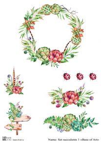 Set succulent 1