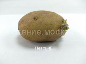 """Семенной картофель Супер Элита """"Невский"""", 1 шт."""