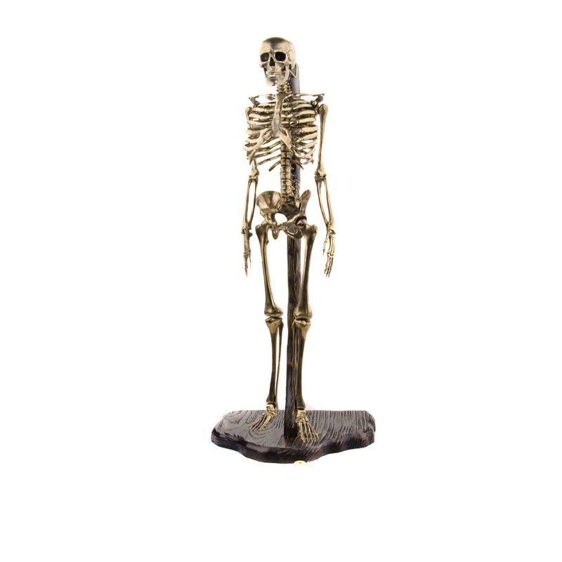 Скелет