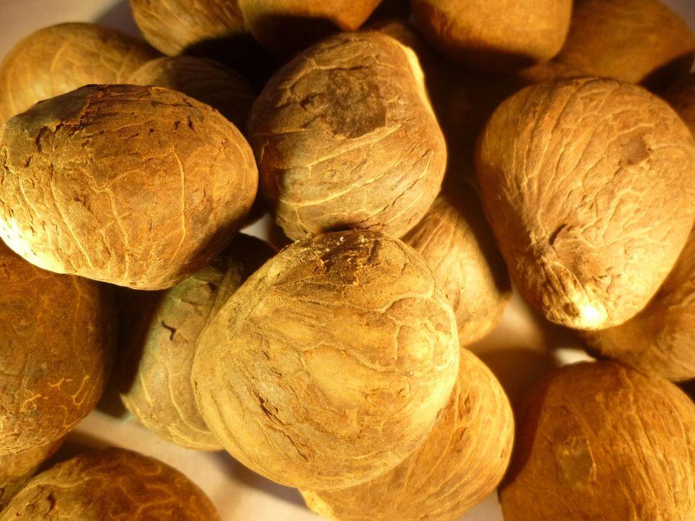 саженцы грецкого ореха В-2( прекрасный опылитель) заказ от 50шт