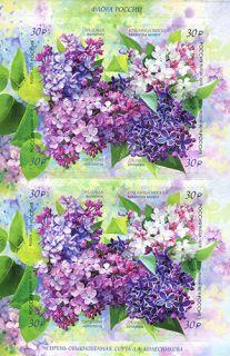 Почтовая открытка Флора России. Сирень