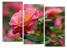 Аромат розы