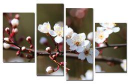 Цветки вишни 2