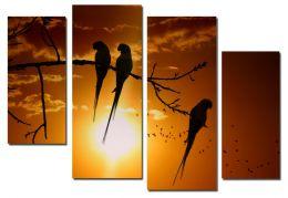 Попугаи на закате