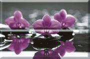 Composicion Wellness Purple 01