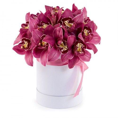 Жгучая орхидея