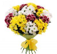 17 кустовых хризантем