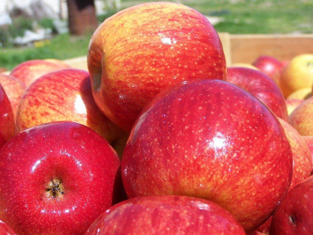 саженцы яблони джонагоред супра  отправка с 1 сентября2020г