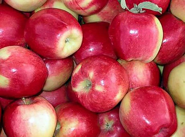 саженцы яблони амброзия отправка с 1 сентября предзаказ