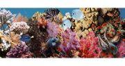 Ocean Reef 1 Декор 20x50