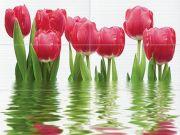Фреш Панно тюльпаны 64-04-21-160-0 75х100 (из 6-ти ч.)