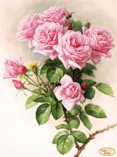 ТК-073. Английские Розы. А3+ (набор 1350 рублей) Tela Artis