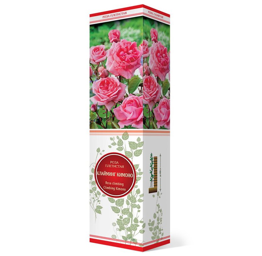 Роза плетистая Клайминг Кимоно