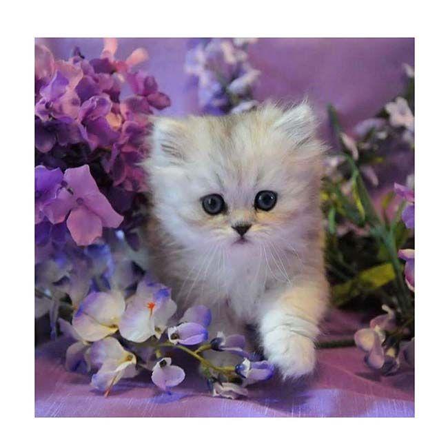 Картина по номерам Котенок в сиреневых цветах 30*30см KH0387
