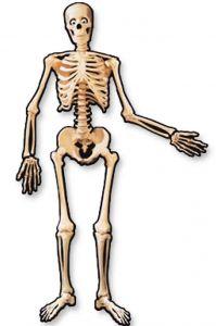 Баннер Скелет подвижный (1,4 м, картон)