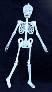 Скелет светящийся  пластиковый (150 см)