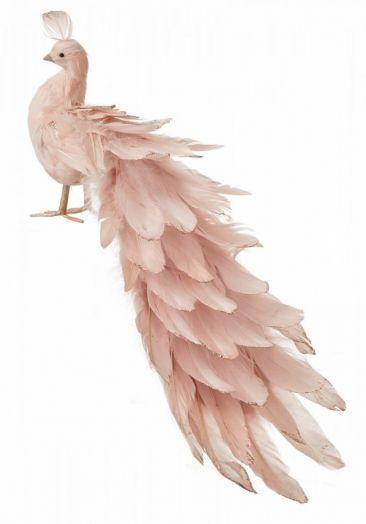 Павлин розовый