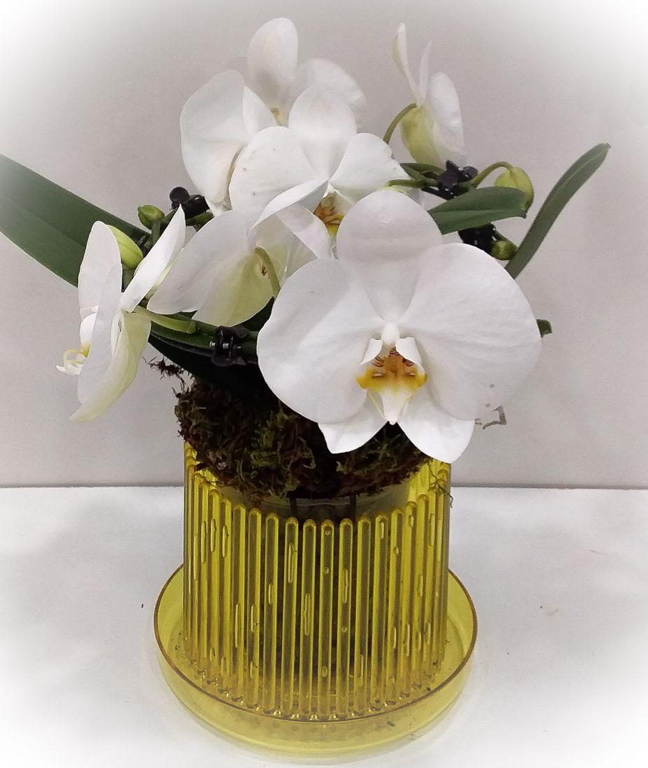 Кашпо для орхидей Корона (стандарт)