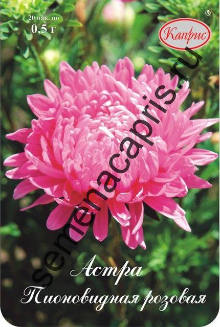 Астра Пионовидная розовая Даная (Каприс)