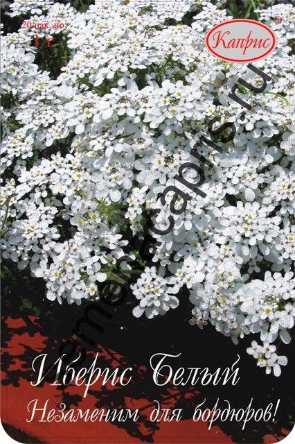 Иберис Белый (Снежный ковер) (Каприс)