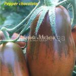 tomat-tomat-percevidnyj-shokoladnyj-kollekcionnyj-myazinoj