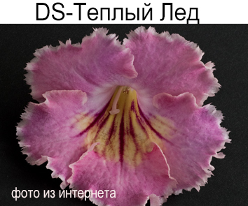 DS-Теплый Лед (П.Еникеев)