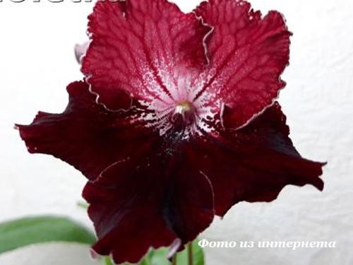 UA-Кармен (Ю.Склярова)
