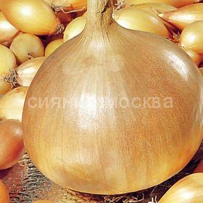 Лук-севок Золотистый Семко, 500 гр